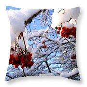 Snow On The Mountain Ash Throw Pillow