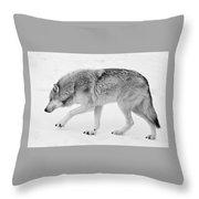 Snow Prowler Bw Throw Pillow
