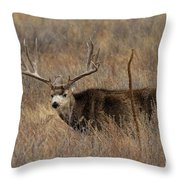 Snow Showers Throw Pillow