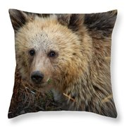 Snow The Grizzly Throw Pillow