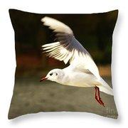 Snow White Seagull Throw Pillow