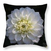 Snowball Dahlia  2 Throw Pillow