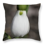 Snowdrop #2 Throw Pillow