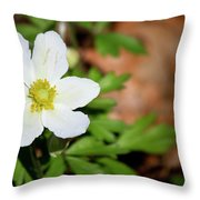 Snowdrop Anemone Throw Pillow
