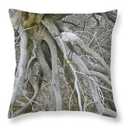 Snowy Egret - Egretta Thula - On Marsh Tangle Throw Pillow