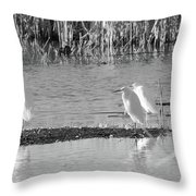 Snowy Egret - 1 Throw Pillow