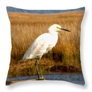 Snowy Egret 2 Throw Pillow