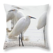 Snowy Egret And Friends Throw Pillow