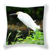 Snowy Egret In The Everglades Throw Pillow