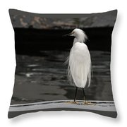Snowy Egret Looking For Next Meal Throw Pillow