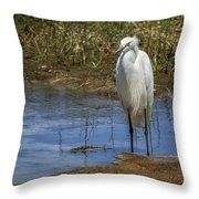 Snowy Egret Of Chincoteague No. 3 Throw Pillow