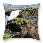 Snowy Egret  Series 2  3 Of 3  Adjusting Throw Pillow