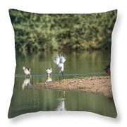 Snowy Egret Stretch 4280-080917-1 Throw Pillow