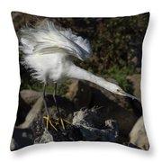 Snowy Egret Stretch Throw Pillow