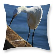 Snowy Egret That Minnow Will Be Fine Throw Pillow