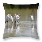 Snowy Egrets On Calm Water Throw Pillow