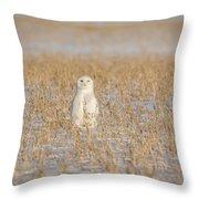 Snowy Owl 2016-4 Throw Pillow