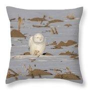 Snowy Owl 2016-9 Throw Pillow