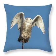 Snowy Owl 2018-17 Throw Pillow