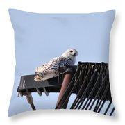 Snowy Owl 2959 Throw Pillow
