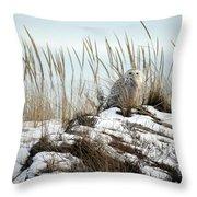 Snowy Owl In Dunes #2 Throw Pillow