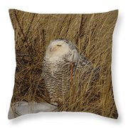 Snowy Owl In Grass Throw Pillow