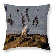 Snowy Owl On A Jetty Throw Pillow