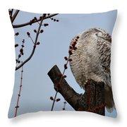 Snowy Owl Preening Throw Pillow