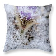 Snowy Pasqueflower Morning Throw Pillow