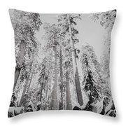 Snowy Sequoias At Calaveras Big Tree State Park Black And White 3 Throw Pillow