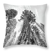 Snowy Sequoias At Calaveras Big Tree State Park Black And White 6 Throw Pillow