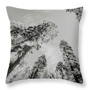 Snowy Sequoias At Calaveras Big Tree State Park Black And White 7 Throw Pillow
