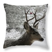 Snowy Young Buck Throw Pillow
