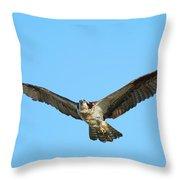 Soaring Osprey Throw Pillow