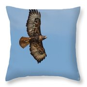 Soaring Red Tail Hawk Throw Pillow