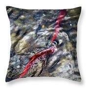 Sockeye Salmon, Alaska, August 2015 Throw Pillow