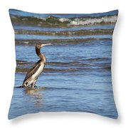 Socotra Cormorant Throw Pillow