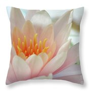 Soft And Delicate Water Lily Throw Pillow