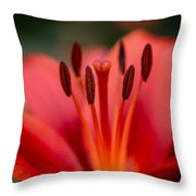 Soft Intimate View Throw Pillow