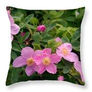 Soft Light On Nookta Rose Rosa Nutkana Throw Pillow
