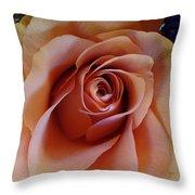 Soft Peach Rose Throw Pillow