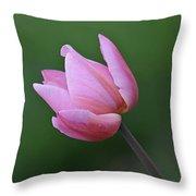 Soft Pink Tulip Throw Pillow