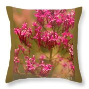 Soft Pirouette Throw Pillow