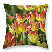 Soft Radiance Throw Pillow