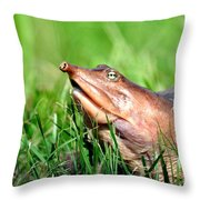 Soft Shell Turtle  Throw Pillow