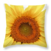 Soft Sunflower Throw Pillow