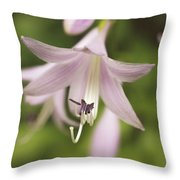 Softened Hosta Bloom Nature Photograph  Throw Pillow