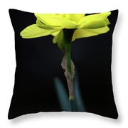 Solitaire Yellow Daffodil Throw Pillow