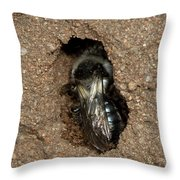 Solitary Bee  Andrena Cinearia Throw Pillow