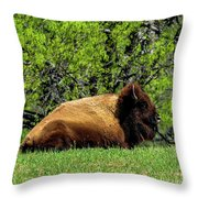 Solitary Buffalo Throw Pillow